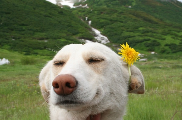 a.aaa-Cute-Dog-with-a-Flower