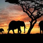 Pieces of the Puzzle: Escape to Africa