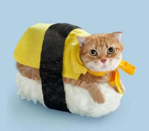 http://www.cbc.ca/strombo/news/weird-cat-sushi-rolls.html