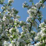 Mood Ring: Spring