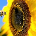 Witching Hour: Honey and Mass Extinction @ Iowa City Public Library 10/21/17