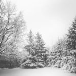 Bach Is Back: What to Add to Your Seasonal Playlist
